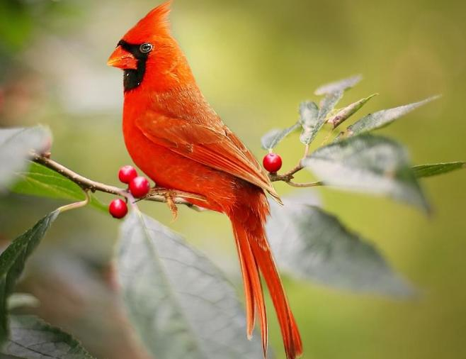 kuş kumu nedir ne işe yarar