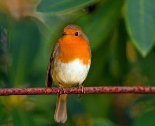 kuş tüneği ve tünek çeşitleri