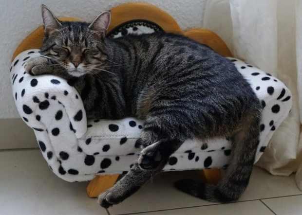 eve dökülen kedi ve köpek tüyünü azaltmak