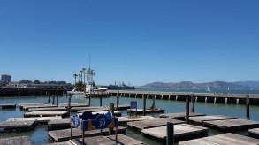 Les fameux Sealions qui squattent près du Pier 39