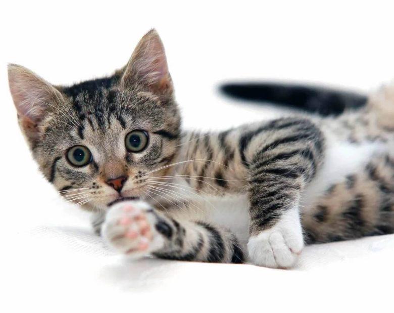 A feline friend