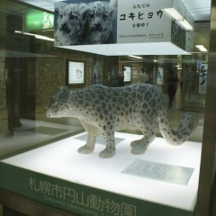 札幌大通駅にあるSnow Leopard像