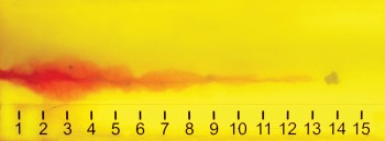 ballistic gelatin showing wound cavity produced by a .40 S&W 175-grain bullet