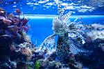 Akwarium gdyńskie (Oceanarium)