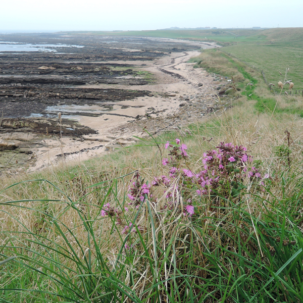 Mile 70 - Beyond Fife Ness. Sponsored by Richard Fisher, Fraser Bell, Lorna and Ken Wilson, Richard Barker, Colin Aimers, John Gaskell and Stina and Robert MacDonald.