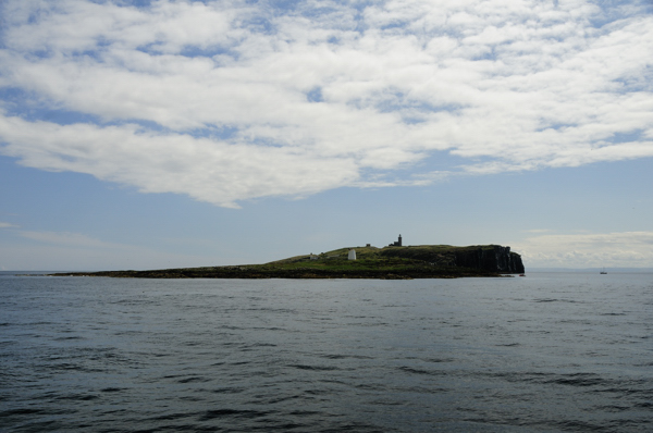 Approaching the Isle of May