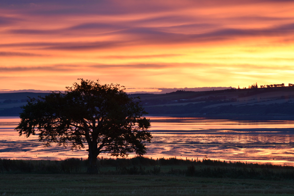 Beech Tree at Sunrise, Udale Bay, Black Isle