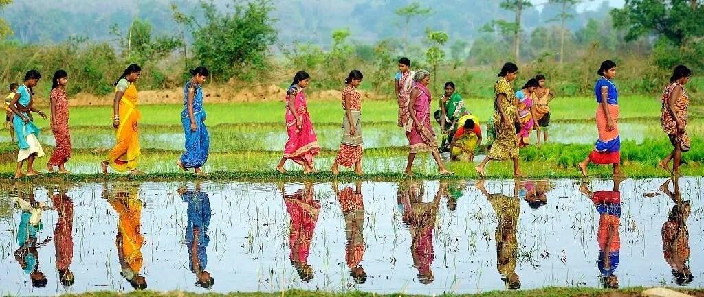 Women walking in paddy fields