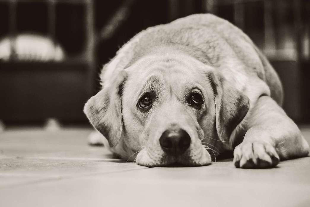 dog-1126025_1920
