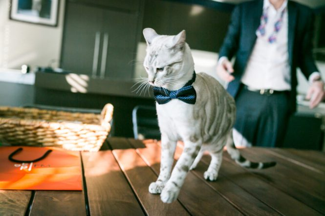 Cat for bowtie for an article on creative borrowed and blue wedding ideas