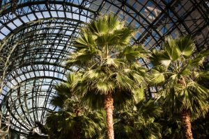 Interior of Brookfield Place for an article on public atriums as an option for NYC photo shoot locations