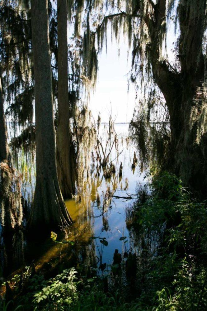 A view through the trees to Lake Hancock at Circle B Bar Reserve