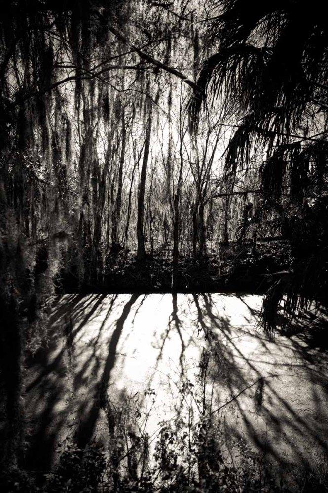 Shadows through the trees at Circle B Bar Reserve