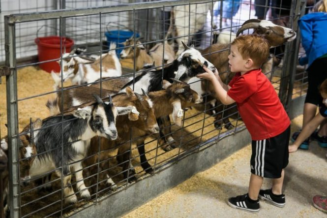 The mooternity ward at the Florida State Fair, photographed by NYC photojournalist, Kelly Williams