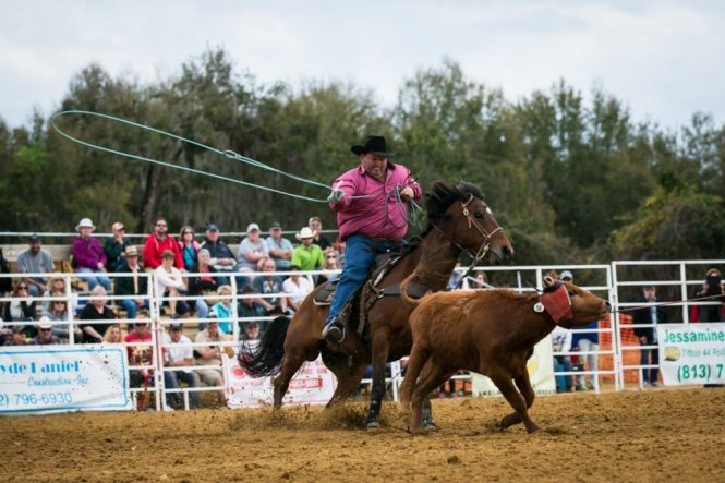 Cow roping at the county fair championship rodeo, by NYC photojournalist, Kelly Williams