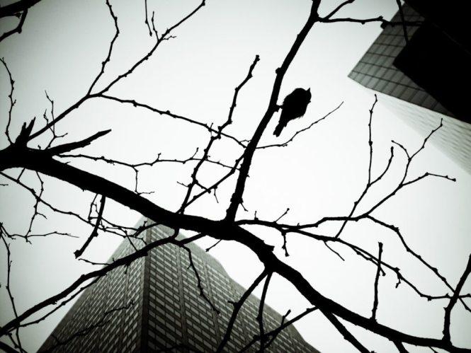 Skyscraper bird, by NYC photographer, Kelly Williams
