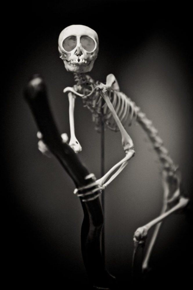 Monkey skeleton portrait, by NYC photographer, Kelly Williams
