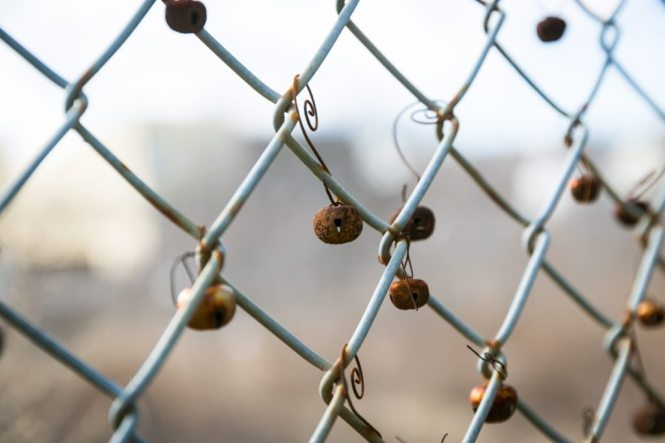 Jingle bells on a fence, by NYC photographer, Kelly Williams