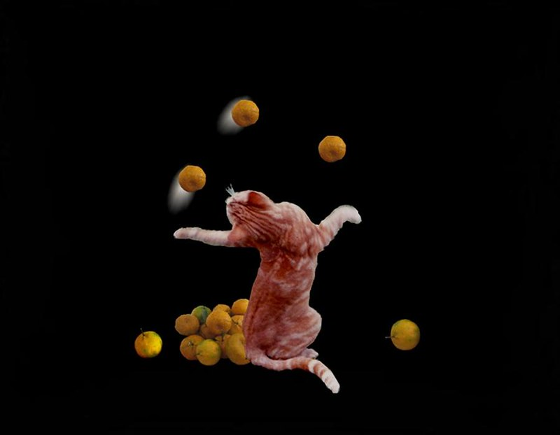 A composition immage of what appears to be a ginger cat juggling fruit