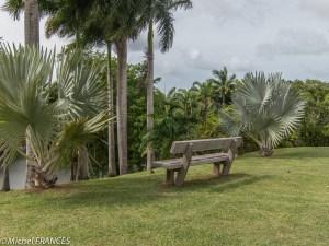Le jardin de l'habitation Clément et sa grande variété de palmiers