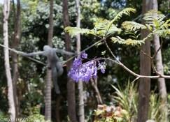 Une fleur de jacaranda