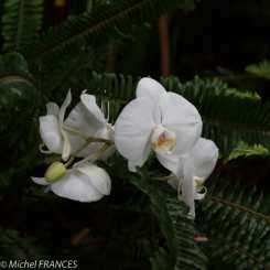 1001 orchidées - grandes serres