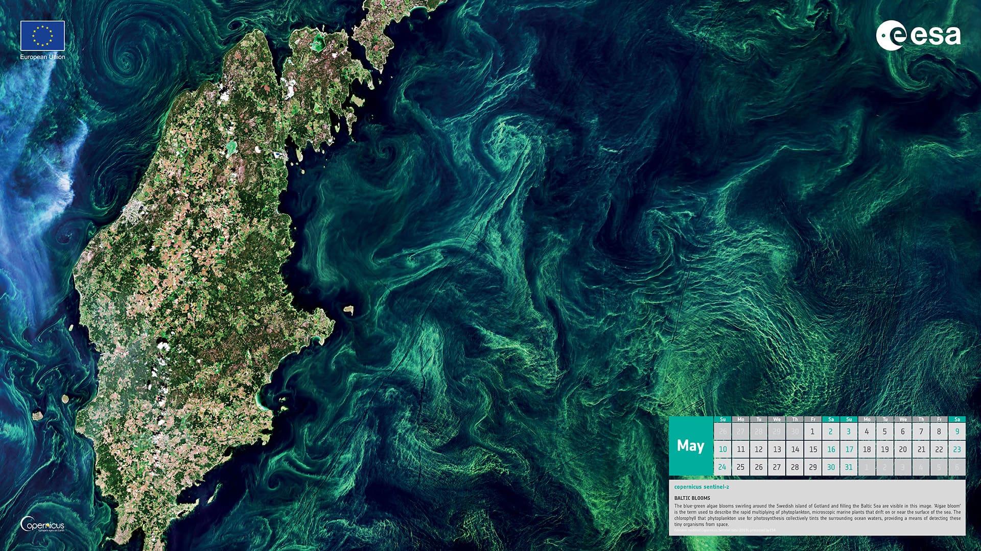 Mai 2020 - bloom en mer Baltique près de l'île de Gotland (Suède)