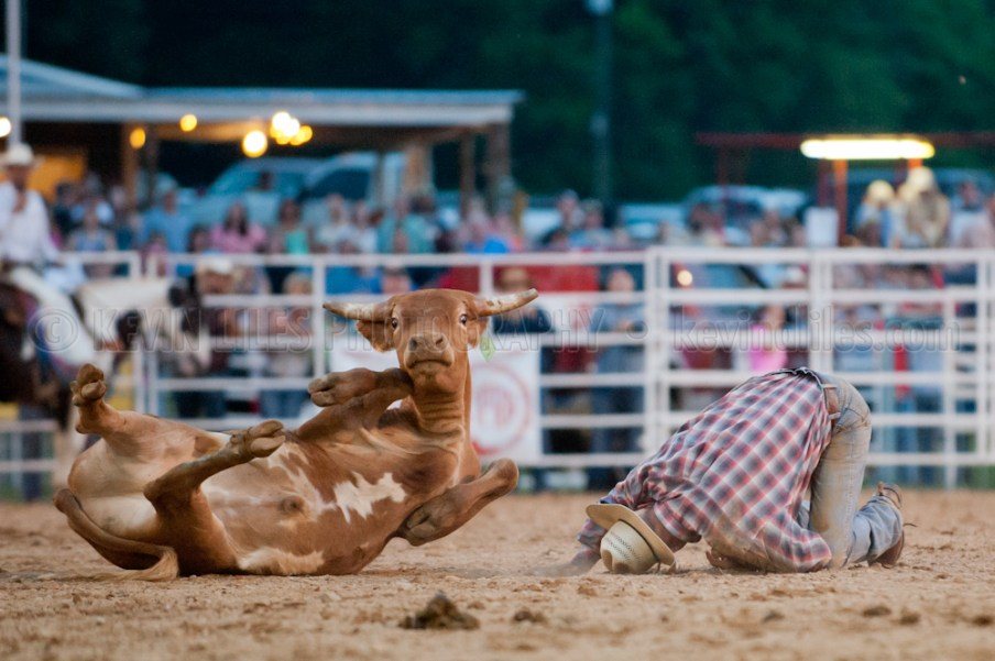 Cowboy is upended during calf wrestling at the Shady Dale Rodeo.