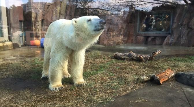科学博物館へ出かけたのに、上野動物園に変更になった件。