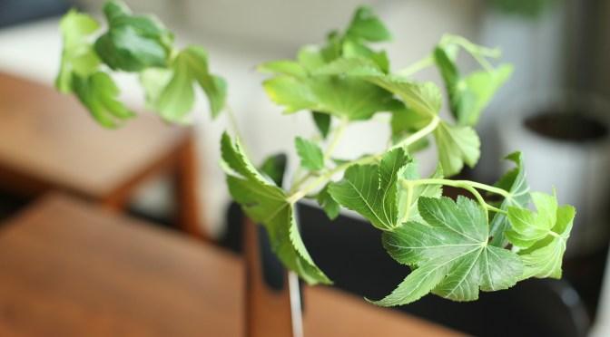 花、枝もの、鉢もの。植物を枯らさないために使っている3つのもの
