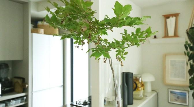 狭い家でも扱いやすい!ニトリの「フラワーベース シリンダー」が、背の高い枝物を飾るのにぴったりでした