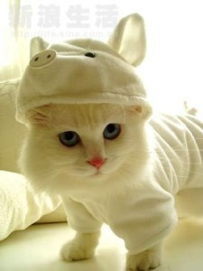 Cute Kitteh in Kigurumi