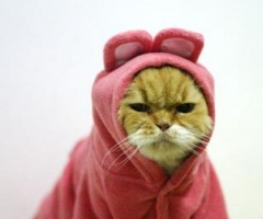 Angry Kitteh in Kigurumi