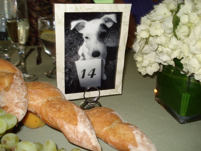 Sweet Ways To Include Your Dog In Your Wedding The King
