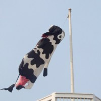 Giant Cows, Helixes and Windsocks