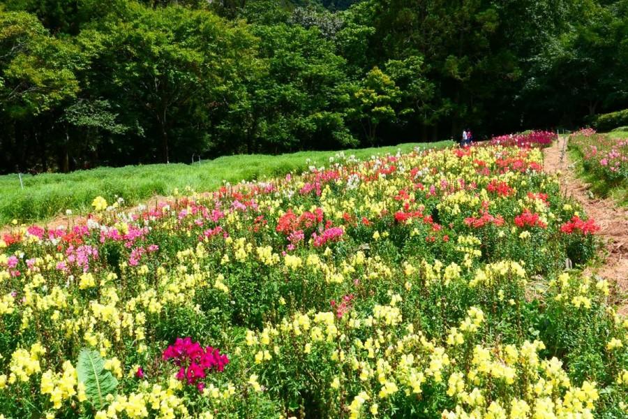 武陵農場 花園廣場