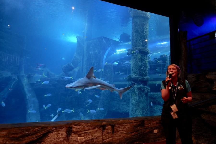 SEALIFE墨爾本水族館