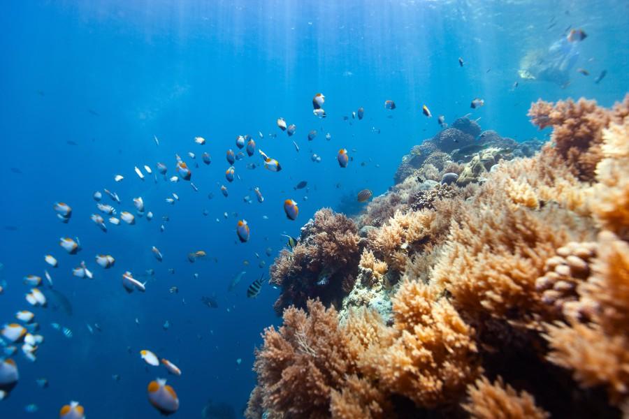 帛琉 大斷層