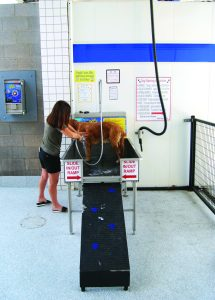 Weiss-Ramp-215x300 Setting Up Your Dog Wash for Success!