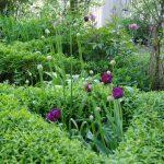 ligustrum vulgare 'Lodense' © Isabelle van Groeningen