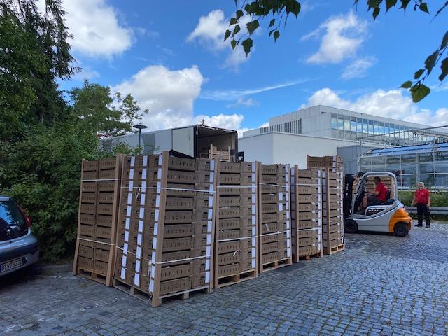 Zwiebeln - endlich sind sie da! © Isabelle Van Groeningen