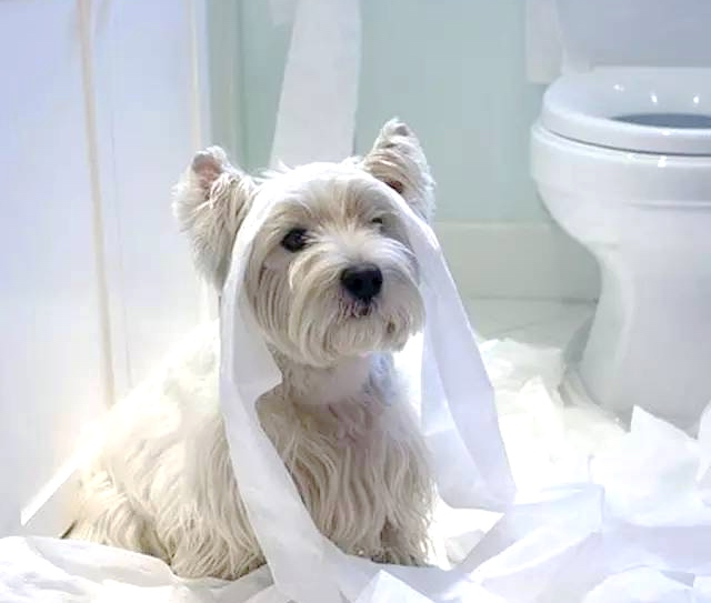 Toilet Training Your Dog