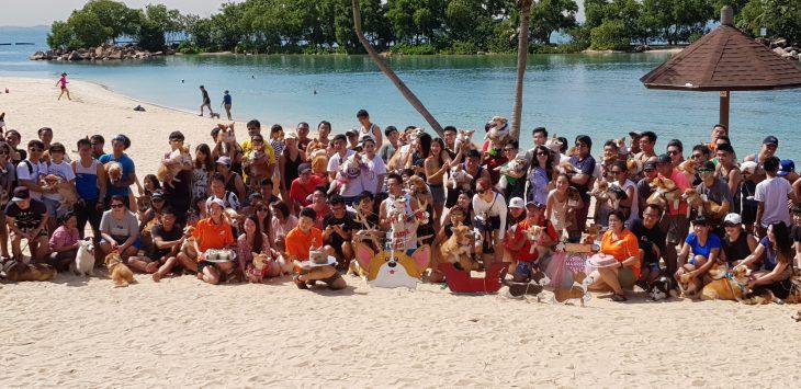 sgcorgi Tanjong Beach