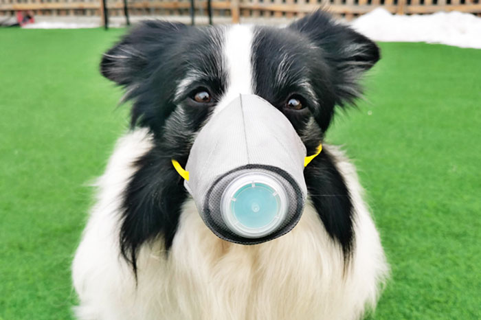 Dog wearing mask in China