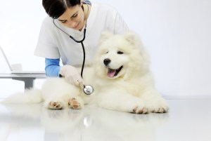 A dog at the vet clinic getting checked.