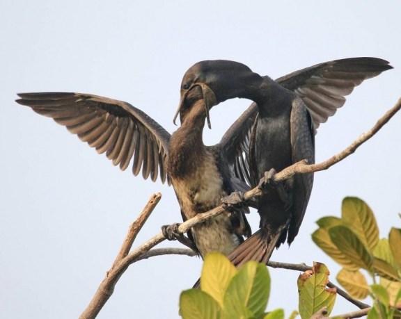 Urban birding in Thrissur.