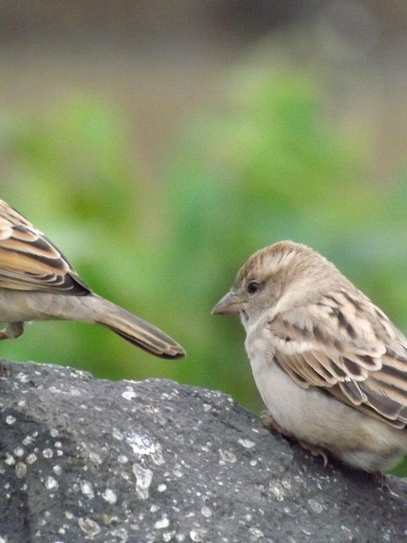 World Sparrow Day 2018 Thrissur, Ernakulam & Malappuram