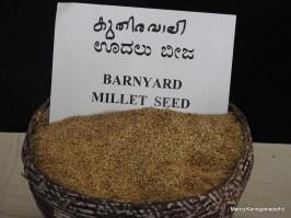 കുതിരവാലി (Barnyard Millet) വിത്ത്