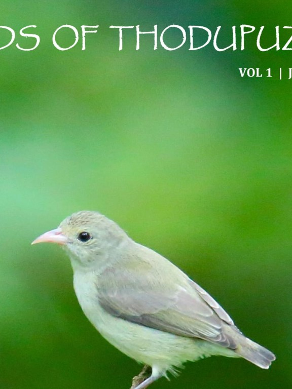 Birds of Thodupuzha – Vol 1 – July 2018