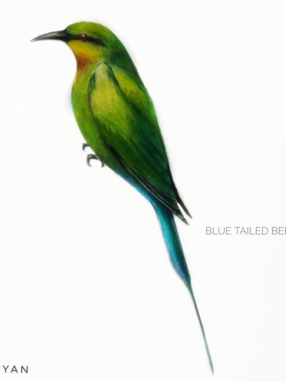 #15- Blue-tailed bee-eater